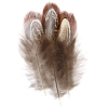 Pheasant Feathers Natural